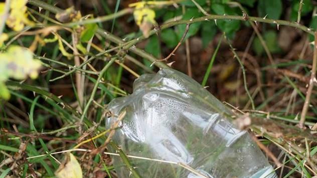 Plastična flaša za zaštitu biljaka od snega - © Pixabay