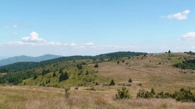 Pogodni tereni za jelensku divljač- © Dragan Gačić/Milan Ostojić