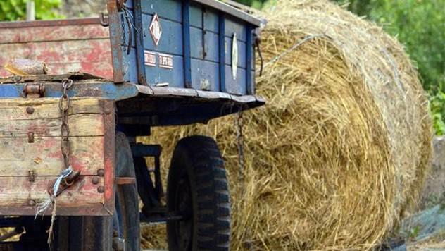 Ilustracija: Poljoprivredna proizvodnja - © Pixabay