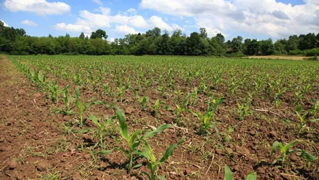 Srpski poljoprivredni paradoksi - © Pixabay