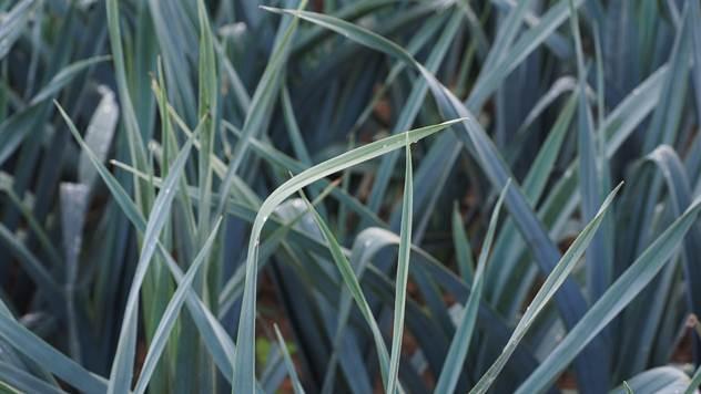 Plodored najznačajnija mera u zaštita bilja - © Agromedia