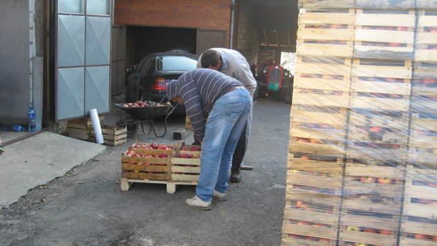 Proizvodnja voća u Topoli - © Foto: Biljana Nenković