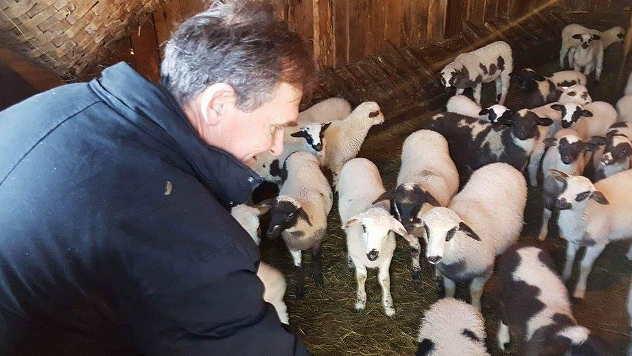 Proredili se kupci za jagnjad  - © Foto: Željko Dulanović