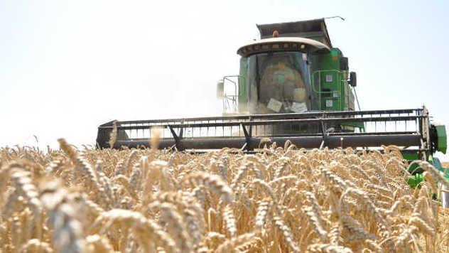 Iz ličnog iskustva: Poljoprivreda nije samo biznis - © Pixabay