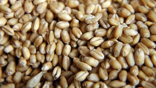 Pšenica - © Agromedia