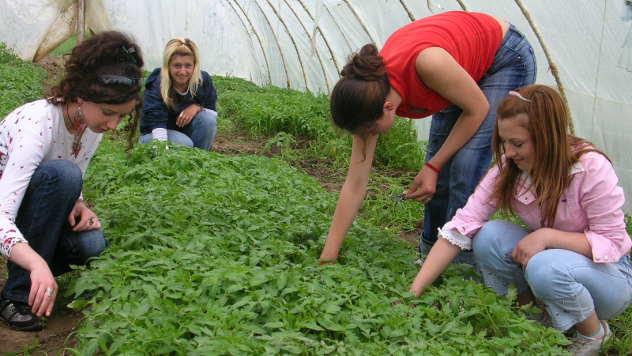 Praktična nastava u plasteniku - © Foto: arhiva Poljoprivredno-hemijske škole Kraljevo