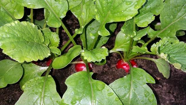 6 predloga šta još možete saditi u bašti - © Pixabay