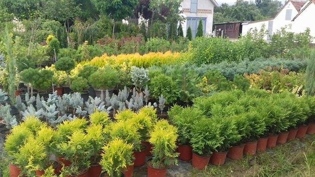 Zelena ili živa ograda: Sada se sadi, kreira oazu mira i štiti od buke i prašine - © Agromedia