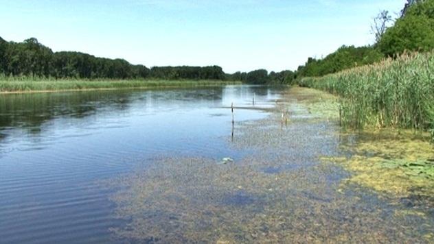 Zagađena reka - © Agromedia