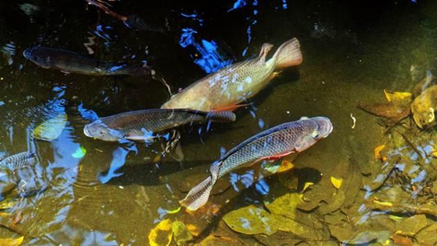 Za uzgoj ribe potrebno više dozvola - ©Pixabay