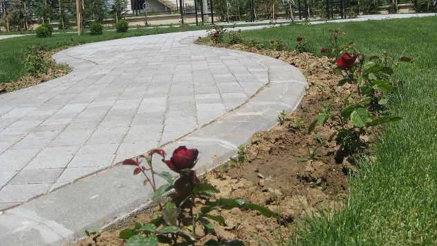 Ruže pokraj staze - © Foto: Biljana Nenković