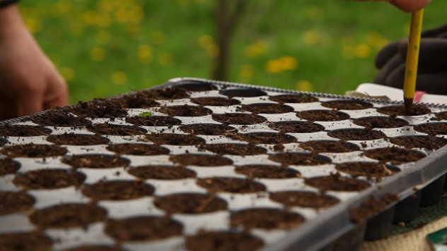 Kako odabrati kontejnere za sadnju semena - ©Agromedia