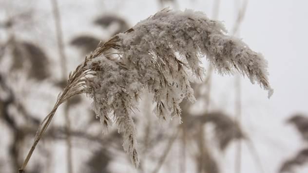 Sneg na biljkama - © Pixabay