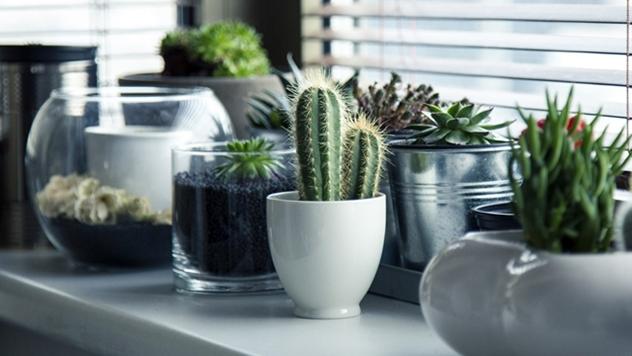 Sobne biljke - © Pixabay