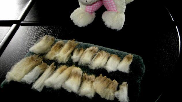 Sortirana vuna po klasama © Foto: Biljana Nenković