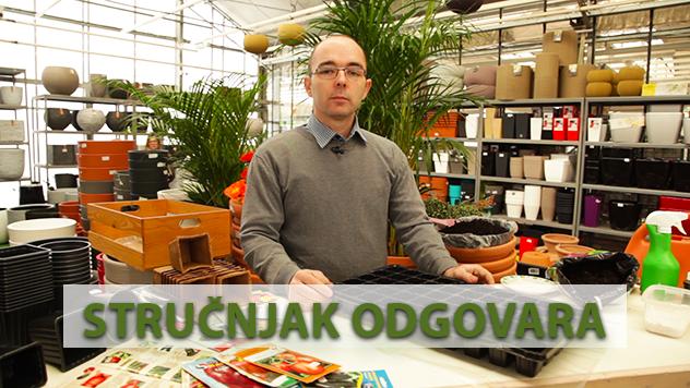 Vladimir Milutinović - © Agromedia