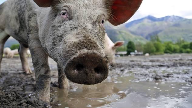 Emisija zagađujućih materija sa farmi sve veći problem - © Pixabay