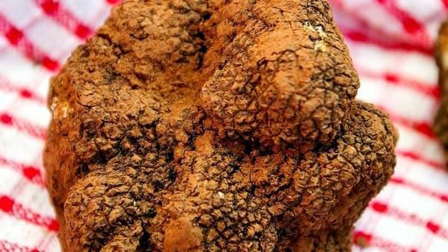Tartufi su najskuplje gljive na svetu - © Pixabay