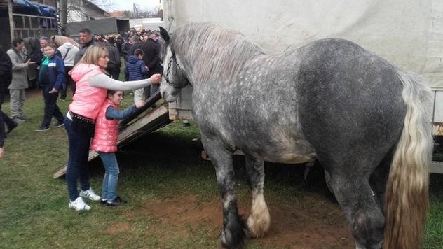 Konj - © Miroslav Mašić