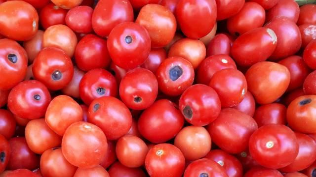 Ovo je najčešći problem na plodu paradajza. Evo kako da ga sprečite. - © Wikimedia