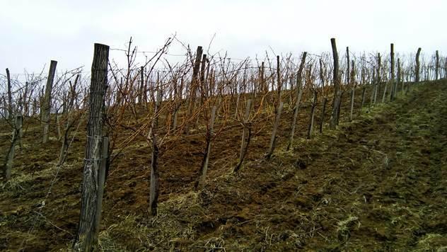 Valjevski kraj se vratio na vinsku mapu Srbije - © Dejan Davidović