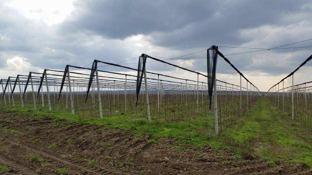Podizanje voćnjaka - © Agromedia