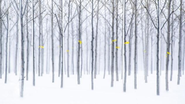 Voćnjak pod snegom ugrožavaju štetočine - ©Pixabay