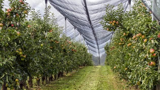 Podizanje voćnjaka - © Pixabay