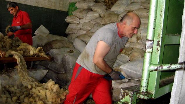 Sortiranje vune © Foto: Biljana Nenković