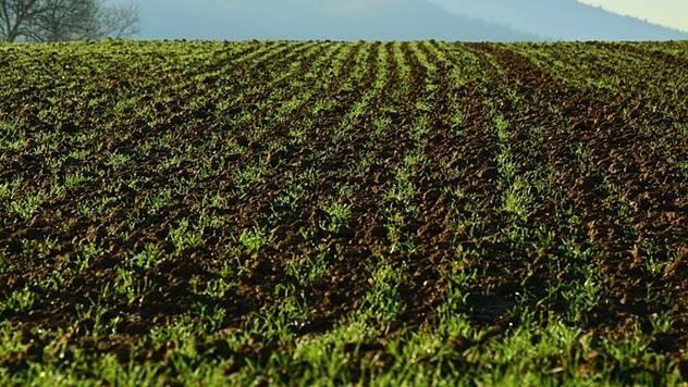 Prodaja poljoprivrednog zemljišta strancima - © Pixabay