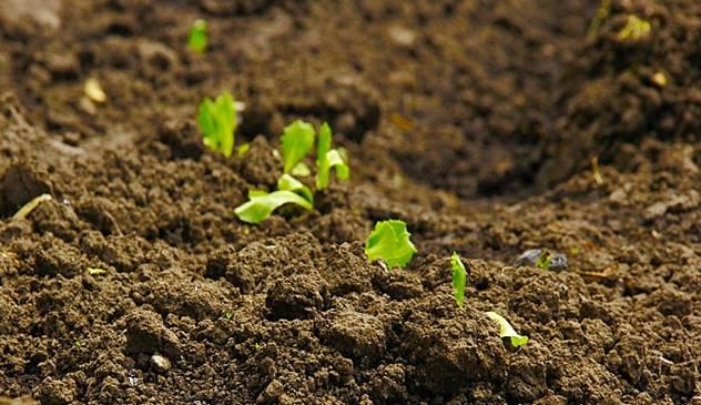 Kako uz pomoć slojeva malča možete da izgradite zdravo zemljište u bašti - © Pixabay