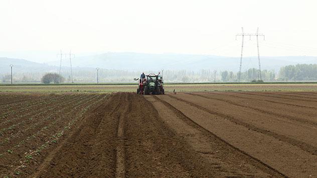 Valjanje je osnovna agrotehnička mera koju morate obaviti ovog proleća - © Agromedia