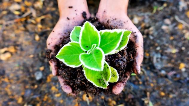 Evo zašto je dobro da ostavite korov u vašem travnjaku - © Pixabay