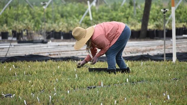 Žene u poljoprivredi - © Pixabay