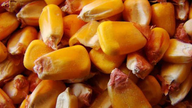 Zrna kukuruza - © Foto: www.piabay.com