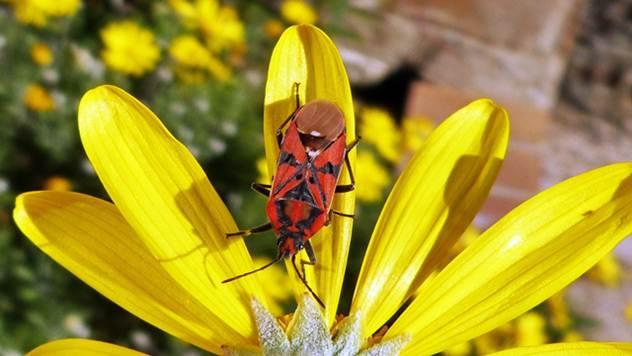 Žuta boja efikasan je način u borbi protiv štetnih insekata - © Pixabay